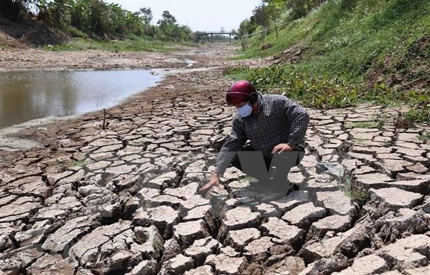Proponen en Vietnam paquete de ayuda para tratar la salinidad y sequia hinh anh 1