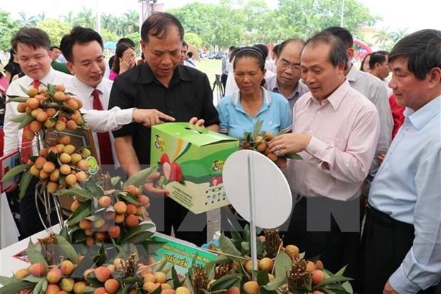 Provincia vietnamita de Hai Duong por promover la exportacion de lichi hinh anh 1