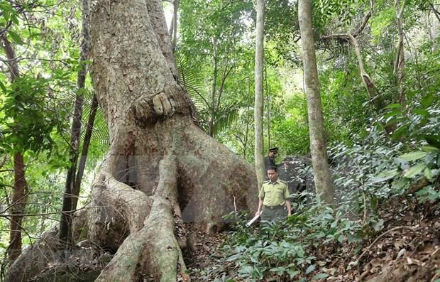 Aumenta cobertura forestal de Vietnam hinh anh 1