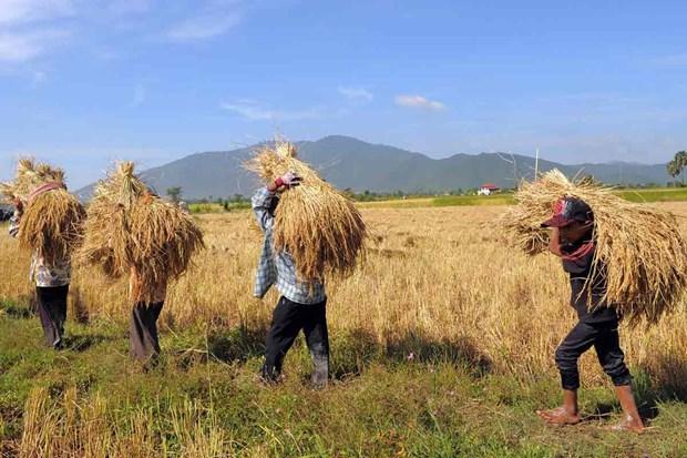 Intensifica Camboya asistencia financiera para sector agropecuario hinh anh 1