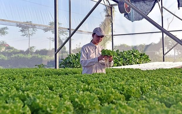 Provincia vietnamita de Bac Ninh registra mas de 15 mil empresas privadas hinh anh 1