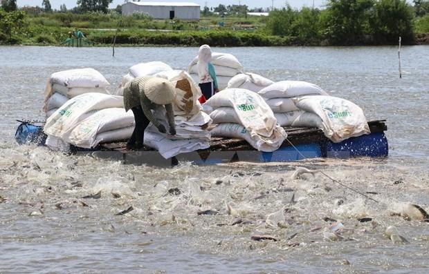 Reduce Estados Unidos impuestos antidumping a pangasius vietnamita hinh anh 1