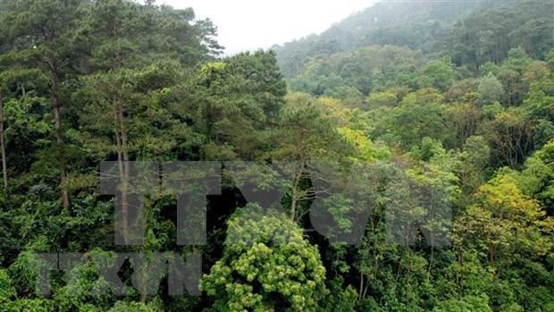 Avanza provincia vietnamita en gestion sostenible de bosques hinh anh 1
