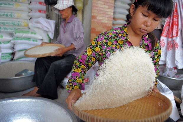 Ventas de arroz de Camboya registran fuerte aumento en primer cuatrimestre de 2020 hinh anh 1