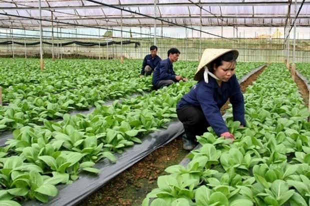 Hanoi promueve inversiones en proyectos agricolas hinh anh 1