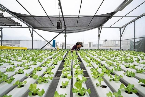 Construira Singapur granjas en tejados del aparcamiento hinh anh 1