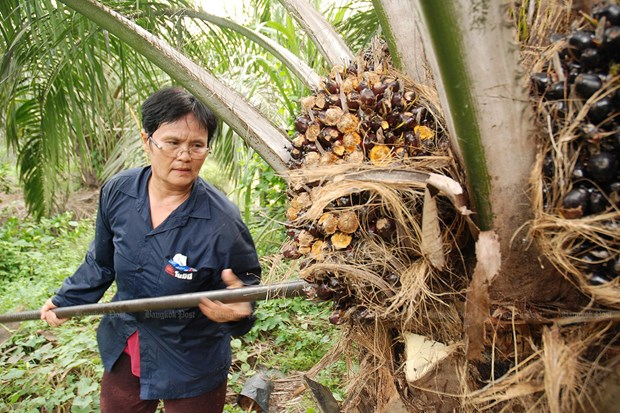 Tailandia usara blockchain en comercio de palma de aceite hinh anh 1