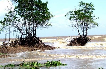 Agencia alemana apoya a provincia vietnamita en resistencia a inundaciones hinh anh 1