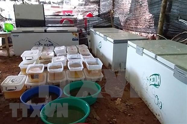 Myanmar incauta mayor cantidad de drogas en la historia del Sudeste Asiatico hinh anh 1
