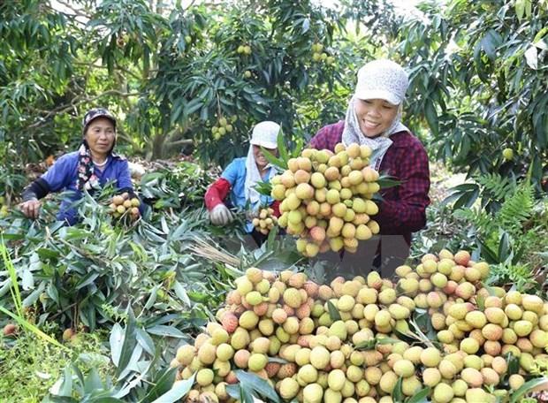 Optimista Vietnam sobre perspectivas economicas, destaca periodico aleman hinh anh 1