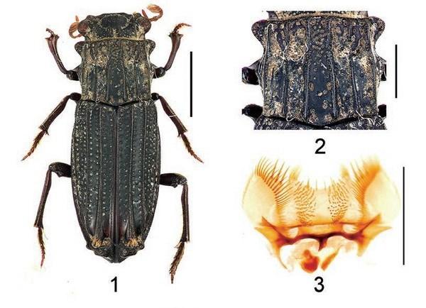 Descubren nuevas especies de insectos en Vietnam hinh anh 1