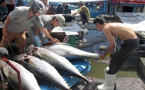 Abogan por incentivar en Vietnam el consumo domestico de atun hinh anh 1