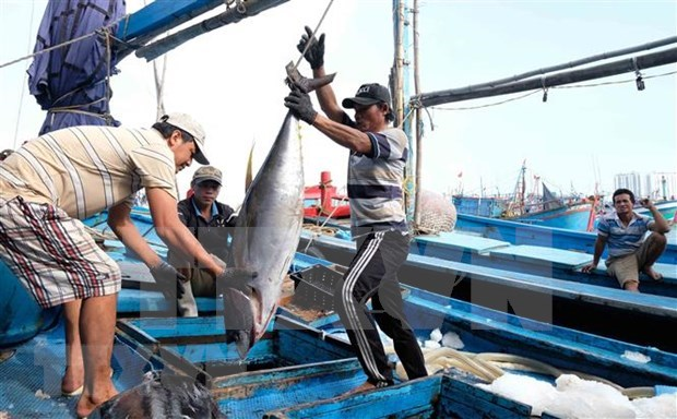 Registran tendencia alcista exportaciones de atun enlatado de Vietnam hinh anh 1