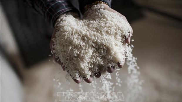 Provincia vietnamita apoya con mil 300 toneladas de arroz a los afectados por sequia hinh anh 1