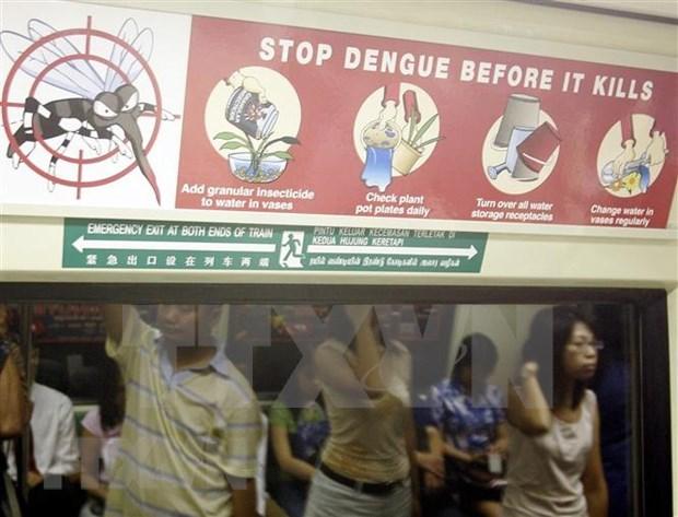 Estalla epidemia de dengue en Singapur hinh anh 1