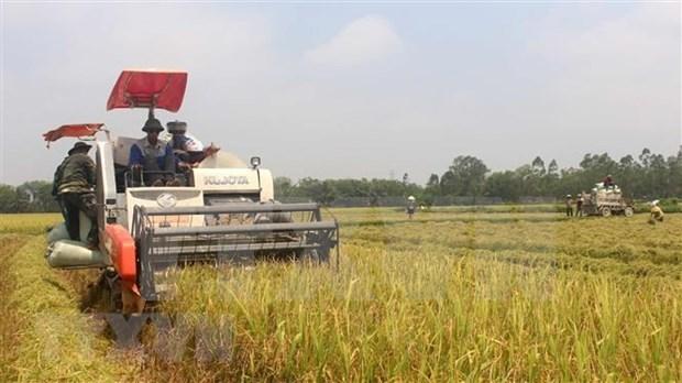 Exportaciones de arroz de Vietnam muestran senales positivas hinh anh 1