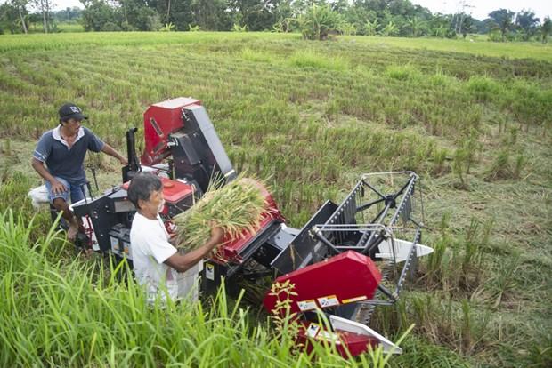 Indonesia amplia extension de tierra de cultivo hinh anh 1