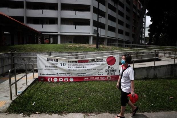 Con 895 casos, Singapur alcanza record semanal de infectados de dengue hinh anh 1
