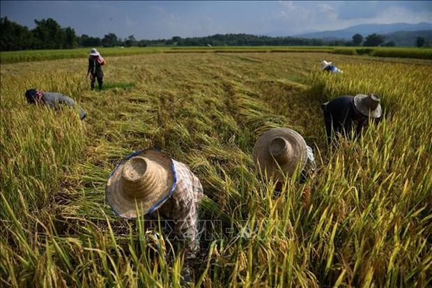 Tailandia se esfuerza por captar inversiones extranjeras en agricultura hinh anh 1