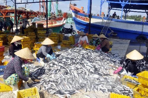 Crece produccion pesquera de Vietnam en primera mitad de 2020 hinh anh 1