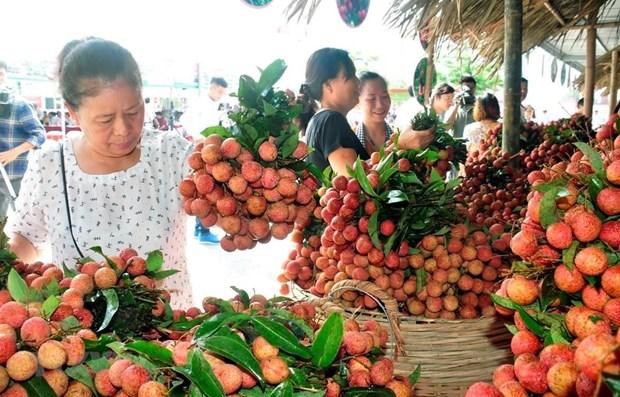 Cadena de produccion y consumo de productos agricolas en Hanoi hinh anh 1