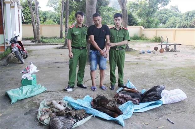 Detectan en Vietnam caso de transportacion ilegal de animales silvestres hinh anh 1