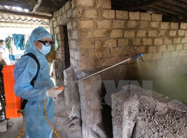 Refuerzan medidas para prevenir la peste porcina africana en 19 provincias vietnamitas hinh anh 1