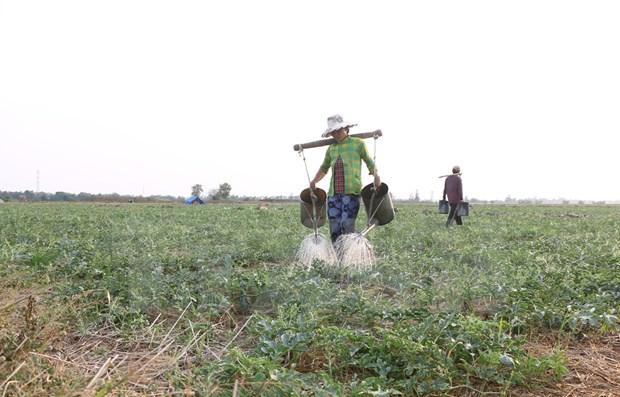 Reconocen a dos distritos vietnamitas con cumplimiento de nuevos estandares rurales hinh anh 1