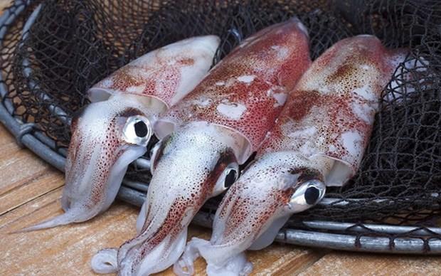 Corea del Sur es el mayor importador de calamar y pulpo de Vietnam hinh anh 1