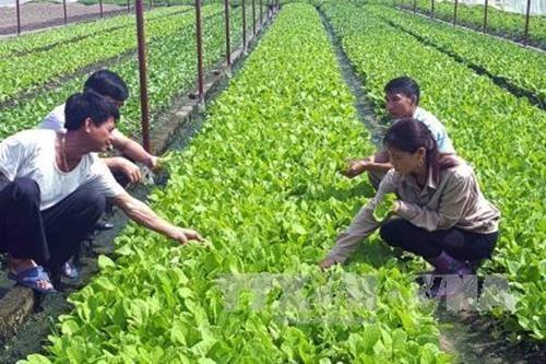 Adopta Vietnam proyecto de desarrollo de agricultura organica para periodo 2020-2030 hinh anh 1