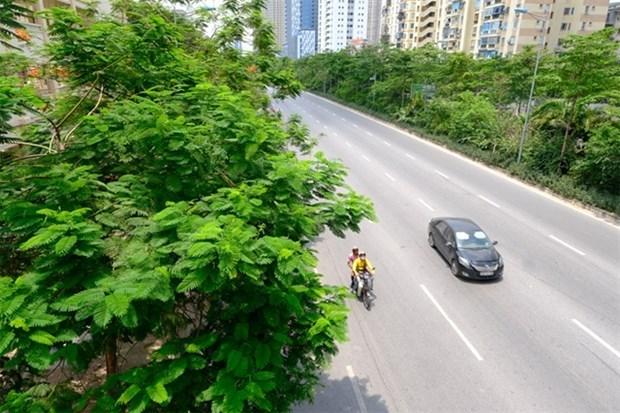 Planean plantar 600 mil arboles en Hanoi este ano hinh anh 1