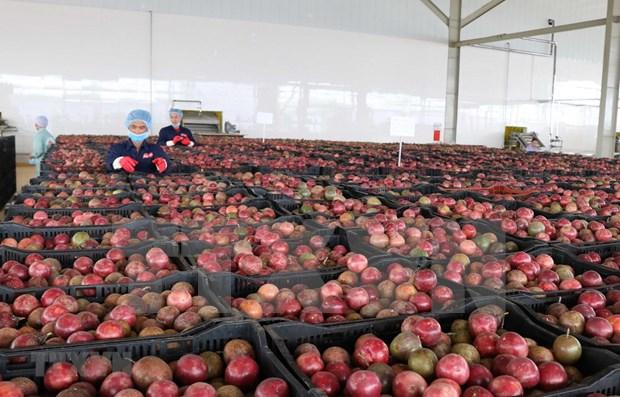 Exportaciones de verduras y frutas de Vietnam aumentan tras meses de caida hinh anh 1