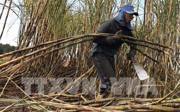 Tailandia busca camino de desarrollo para industria azucarera hinh anh 1