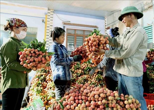 Empresas vietnamitas buscan aumentar exportaciones a China hinh anh 1