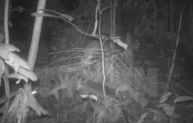 Provincia vietnamita por proteger osos tibetanos y civetas hinh anh 1