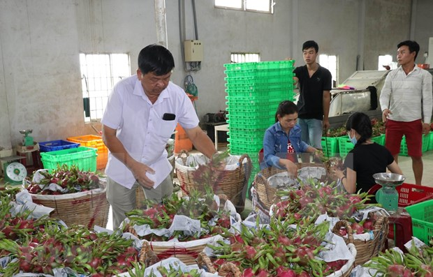 Ventas agricolas de Vietnam a Tailandia registran crecimiento notable hinh anh 1