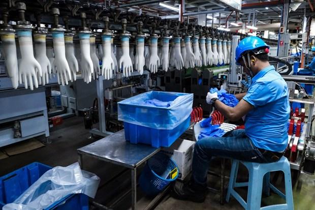 Malasia recauda mas de cinco mil millones de dolares de exportacion de guantes de goma hinh anh 1
