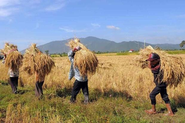 Camboya reitera compromiso con la seguridad alimentaria mundial hinh anh 1