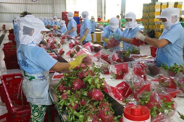 Vietnam espera alcanzar 12 mil millones de dolares en exportacion silvicola hinh anh 1