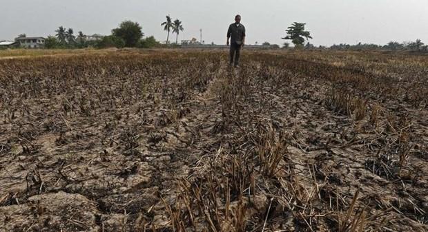 Tailandia enfrenta riesgo de severa escasez de agua, advierten expertos hinh anh 1