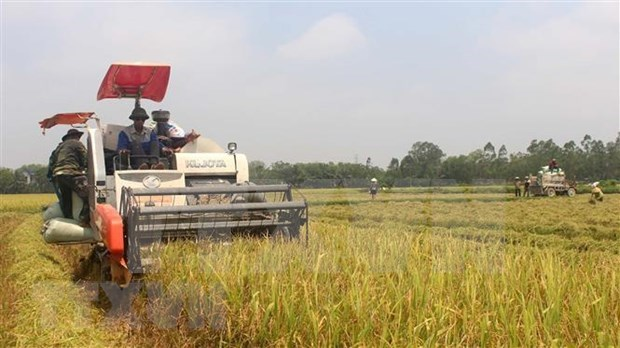 Banco Mundial apoya actividades de agricultores en Filipinas hinh anh 1