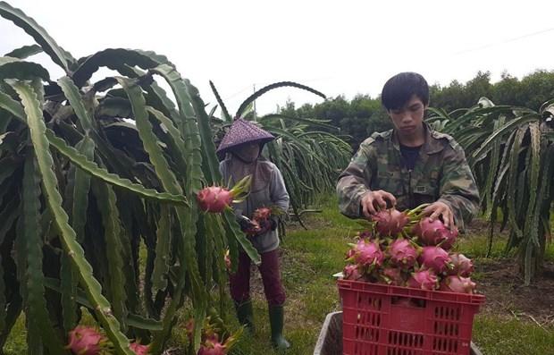 Varios productos agricolas de provincia de Tien Giang mejoran competitividad hinh anh 1