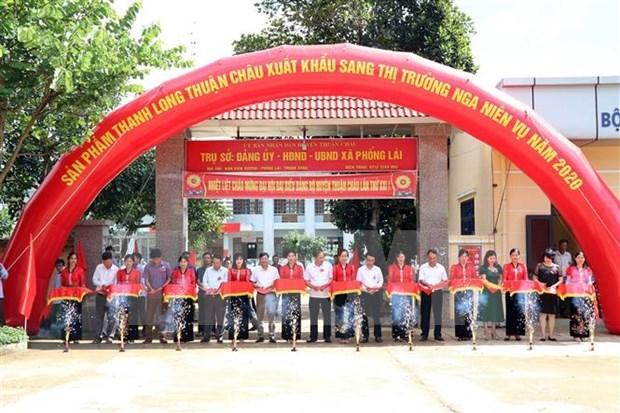 Exporta provincia vietnamita de Son La miles de toneladas de fruta del dragon a Rusia hinh anh 1