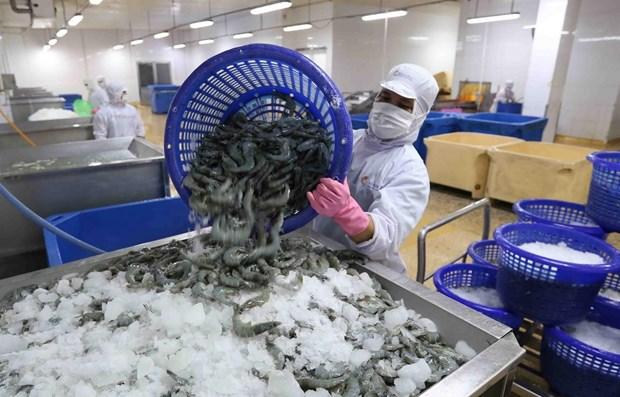 Vietnam aumenta exportacion de camarones en primer semestre de 2020 hinh anh 1