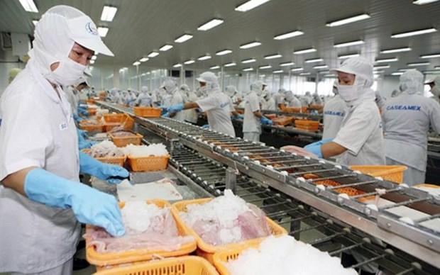 Aumenta la exportacion de calamares y pulpos de Vietnam hinh anh 1