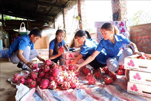 Apoyan acceso de empresas agropecuarias vietnamitas al mercado europeo hinh anh 1