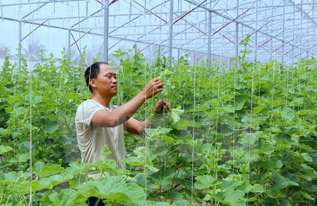 Ciudad vietnamita de Can Tho crea condicion a la operacion del grupo indio TATA hinh anh 1