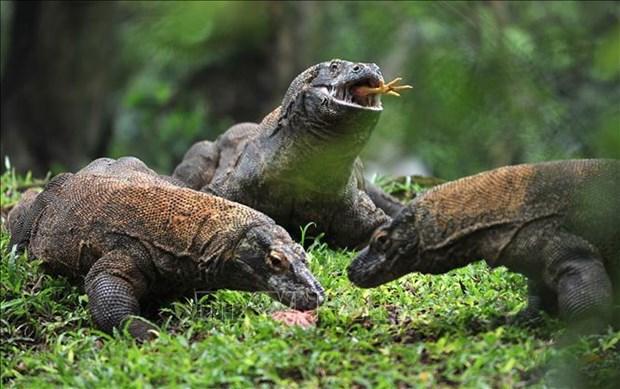Indonesia limita visitantes del Parque Nacional de Komodo hinh anh 1