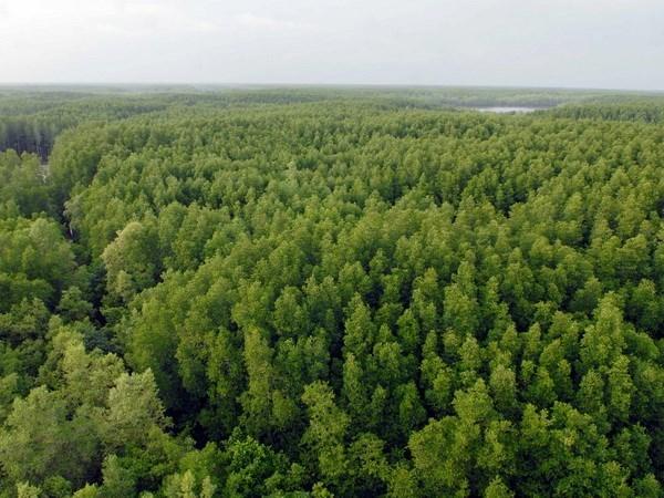 Vietnam se empena en preservar la Reserva de Biosfera del Bosque de manglares Can Gio hinh anh 1