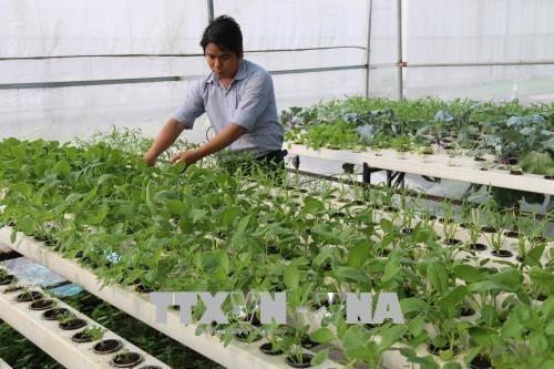 Provincia vietnamita de Tien Giang impulsa reestructuracion agricola hinh anh 1